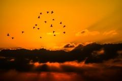 sky-birds