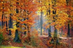woods-fall